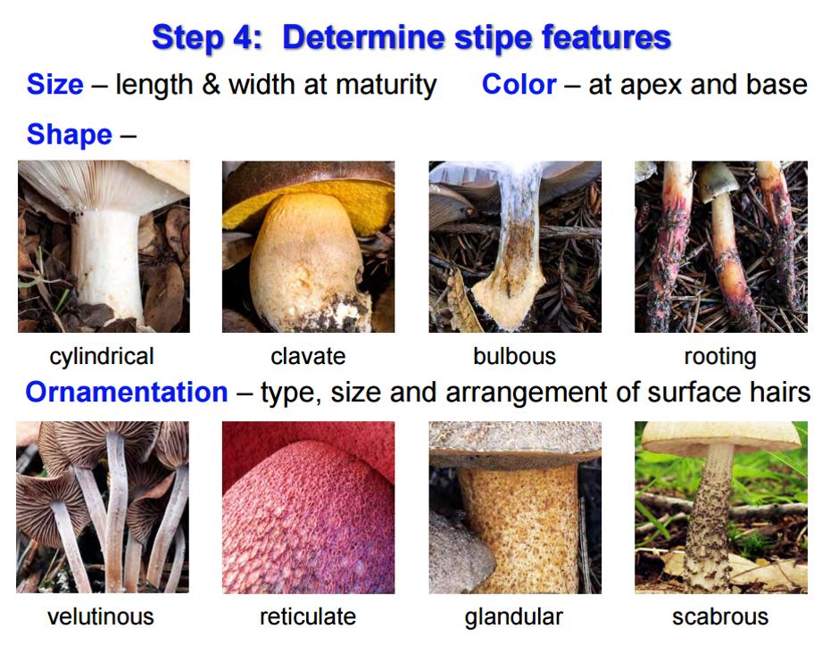 Mushroom determination using stipe features