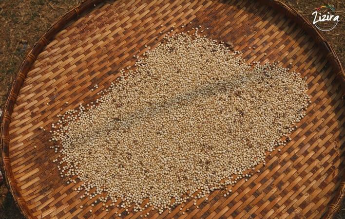 Proso millet the indian millet