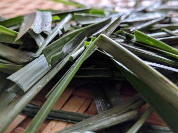 lemongrass grass food, mood and healing