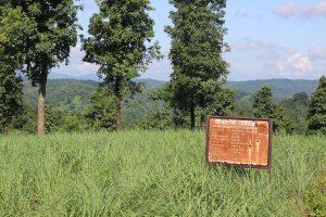 Lemongrass byrwa farm